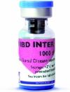 AVI IBD INTER